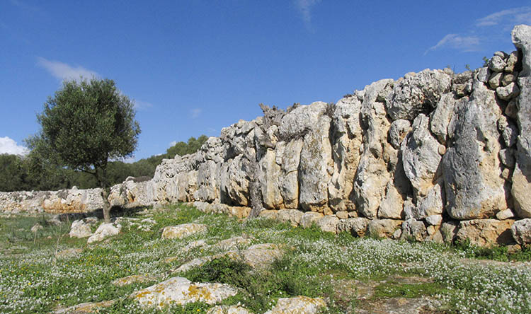 Cyclopean wall at Son Catlar. Megalithic Menorca